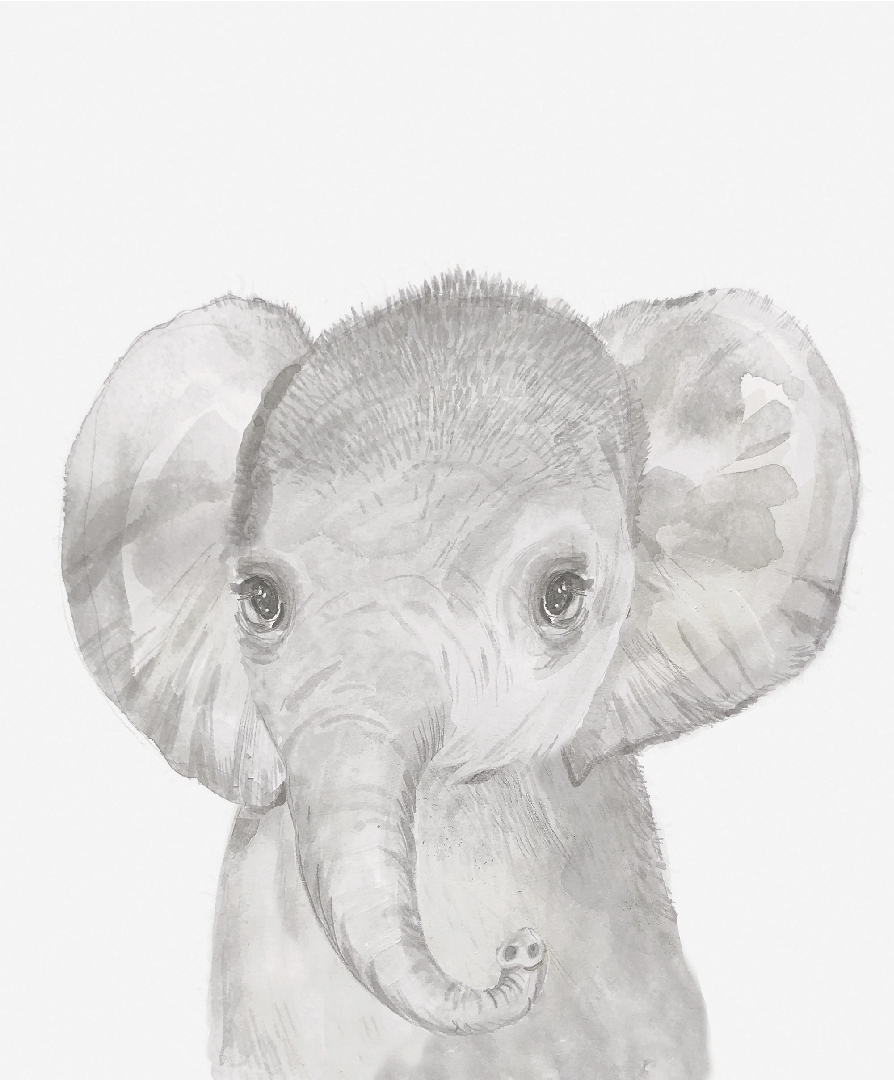 Obrázek na zeď Slon